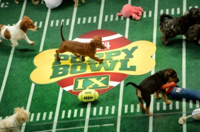 A scene from last year's Puppy Bowl