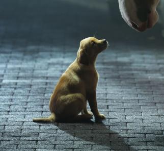 Budweiser's popular 'Puppy Love'