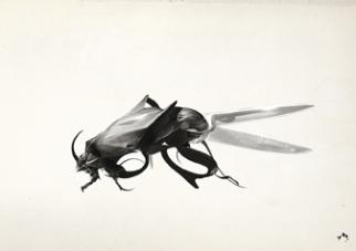Beetle Shears