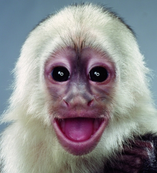 From Monkey Portraits