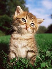 DON'T HATE ME! Meow, purr, etc., etc.