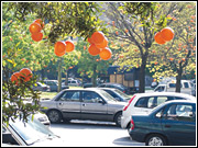 Orange balloons helped turn a busy street in Buenos Aires into an orange grove, part of a media push by Cepita to launch a natural fruit drink.