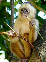 Twitterverse Tells the Media to SHUT UP (Again) ... and/or SaveEndangered Monkeys?