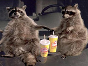 Through Visible World, Wendy's was able to pick from a series of 11 prerecorded ads starring animated raccoons during last year's NFL playoffs.