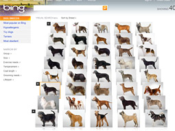 Bing's visual search