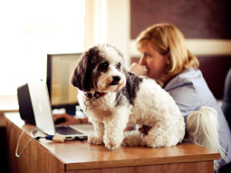 Chief Operating Officer Ray White says having dogs in the office boosts morale and adds to the caring, family-style atmosphere.