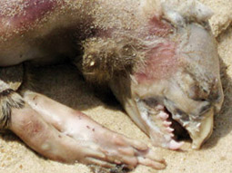 Montauk Monster: Turns out Monty left a grieving wife and five children behind.