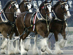 For the upcoming Super Bowl, Anheuser-Busch is considering several commercials that make use of its famous Clydesdale horses, says Bob Lachky, the brewer's chief creative officer.