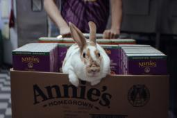 Annie's Organic for Everybunny campaign