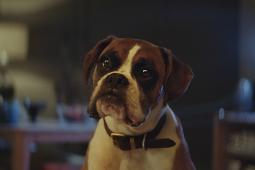 'Buster the Boxer' Bounces Into Christmas for John Lewis