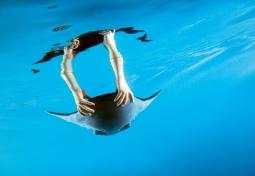 Rudolf Bannasch andLeif Kniese's 'Aqua Ray'