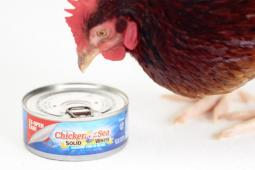 An image from a Chicken of the Sea ad last year.