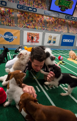 The referee loses control in Animal Planet's 'Puppy Bowl'