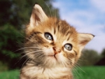 I Blame Twitter for the Fact That I Totally Hate Kittens
