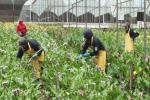 Flower startup the Bouqs Co. touts sustainability