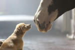 Budweiser 'Puppy Love' Named the Best Super Bowl Ad Meter Winner of All Time