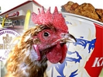 Restaurant chains including McDonalds, KFC, Subway, Popeyes and El Pollo Loco are fielding aggressive campaigns to calm the public. ALSO: Comment on this article in the 'Your Opinion' box below.
