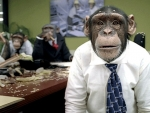CareerBuilder's cost for using chimps in ads has increased as much as 30% since the campaign first began in 2004.