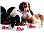 Recall Sheds Light on Pet-Food Industry's Little Secret