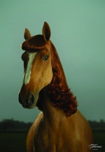 Personal horsing around