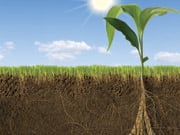 Going Green? Plant Deep Roots