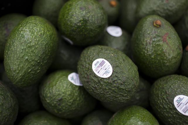 Harvested avocados sit at the Frutas Finas de Tancitaro plant in Tancitaro, Mexico, in July.