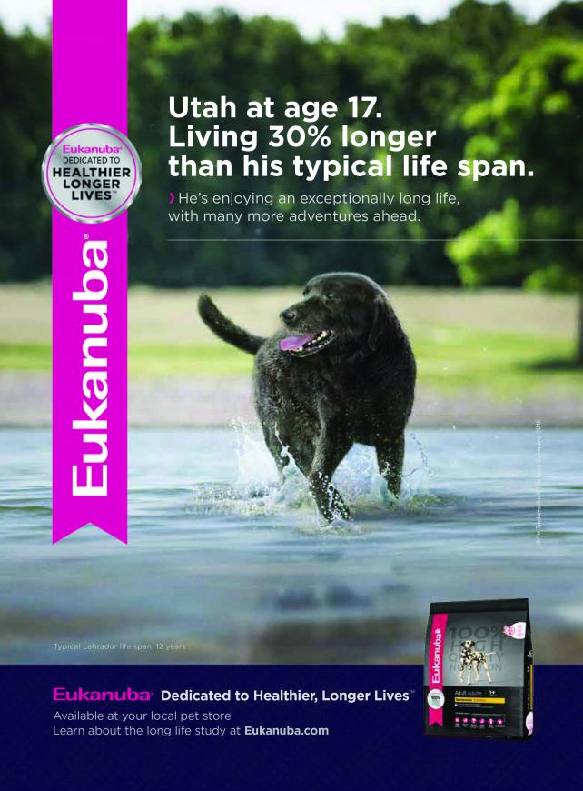 eukanuba ads make bold claim dogs can live 30 longer. Black Bedroom Furniture Sets. Home Design Ideas