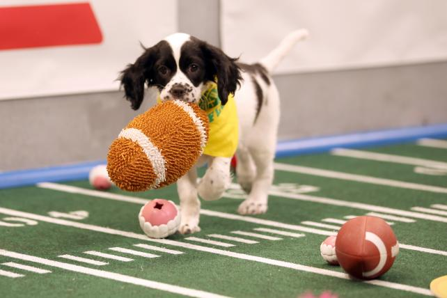 You can immerse yourself more than ever in this year's Puppy Bowl.