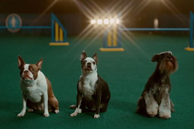 Kristin Chenoweth teaches dogs to sing in Avocados From Mexico's Super Bowl teaser