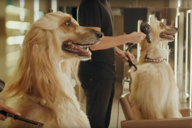 Watch the newest commercials on TV from Reebok, E-Trade, Halo Top and more