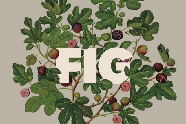 New York agency Figliulo & Partners is now just Fig
