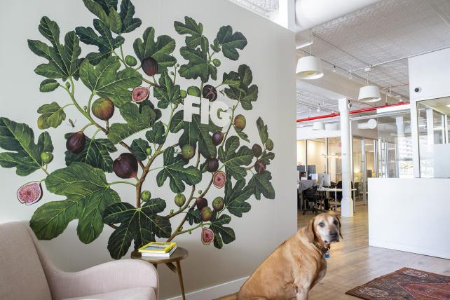 Fig's new logo in the house