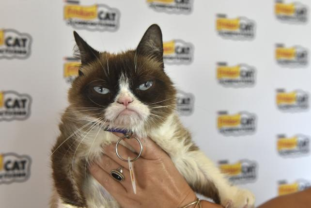 How Cryptokitties Killed Grumpy Cat at SXSW
