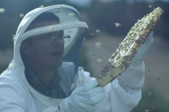 How Intel Is Helping to Solve the Declining Bee Problem