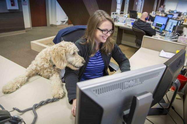 Mars Petcare employees get a little assistance from their four-legged pets in the office.