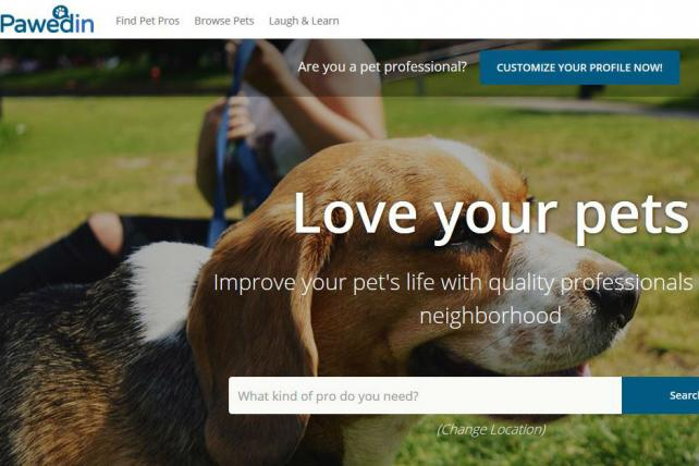 Former P&G Marketer Launches PawedIn, a Media-Agency Blend for Pet Industry