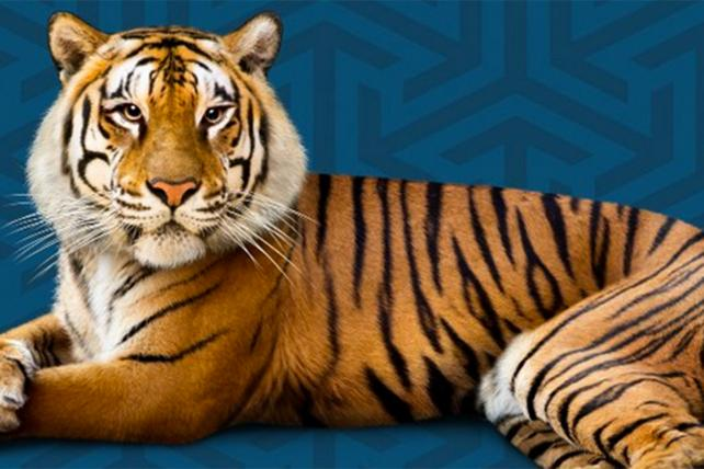Agency Brief: Tigers, Tote Bags and Talent
