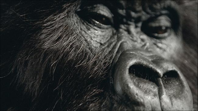 2008 Creativity Award Winner: Cadbury: Gorilla