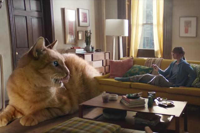 Two cool cats: Viral Video Chart