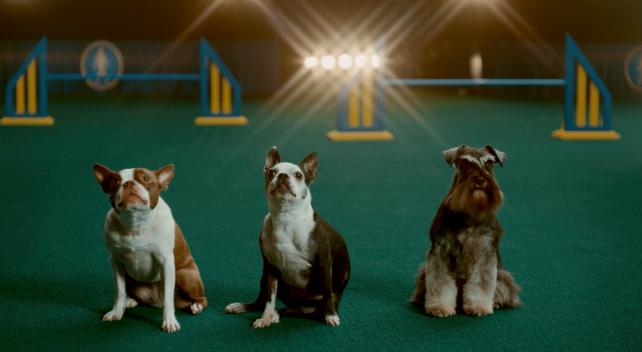 Super Bowl ad suspense, Viacom's streaming plans and 'Dry January': Wednesday Wake-Up Call