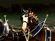 People's Choice: Clydesdales Return to Super Bowl