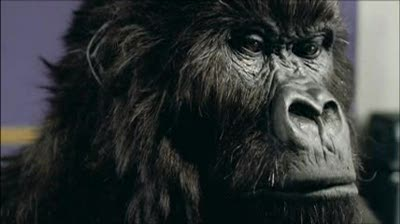 PICK OF THE WEEK: Cadbury: Gorilla