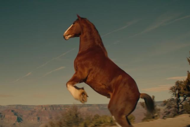 Bud Slips Clydesdales Into Super Bowl at the Last Minute