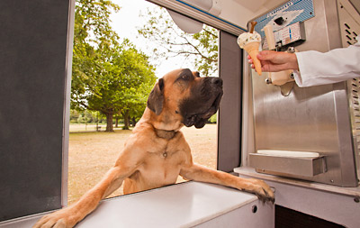 Ice Cream Goes to the Dogs