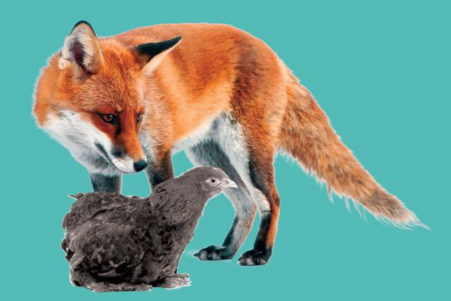 The Fox in the Henhouse: Agencies Balk When Consultants Come to Audit