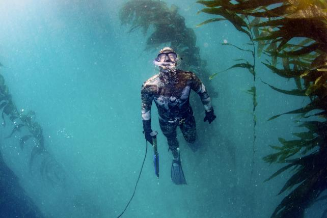 Put down your net and start spearfishing