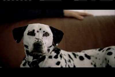 Rate the Ad: Miller Lite: Dalmatian II