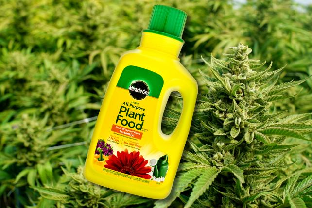 Scott's Miracle-Gro tests whether it can make pot grow, too