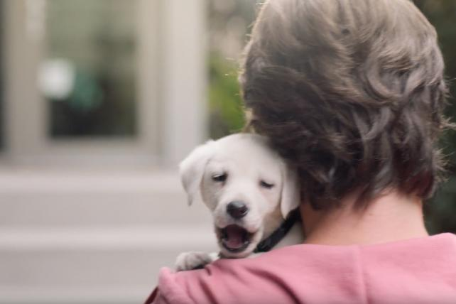 Watch the newest ads on TV from PetSmart, Jif, Progressive and more