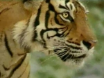 Sound Q&A: Animal Talk